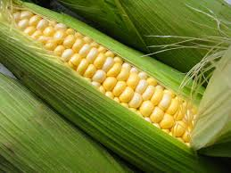 trading futures corn commodity